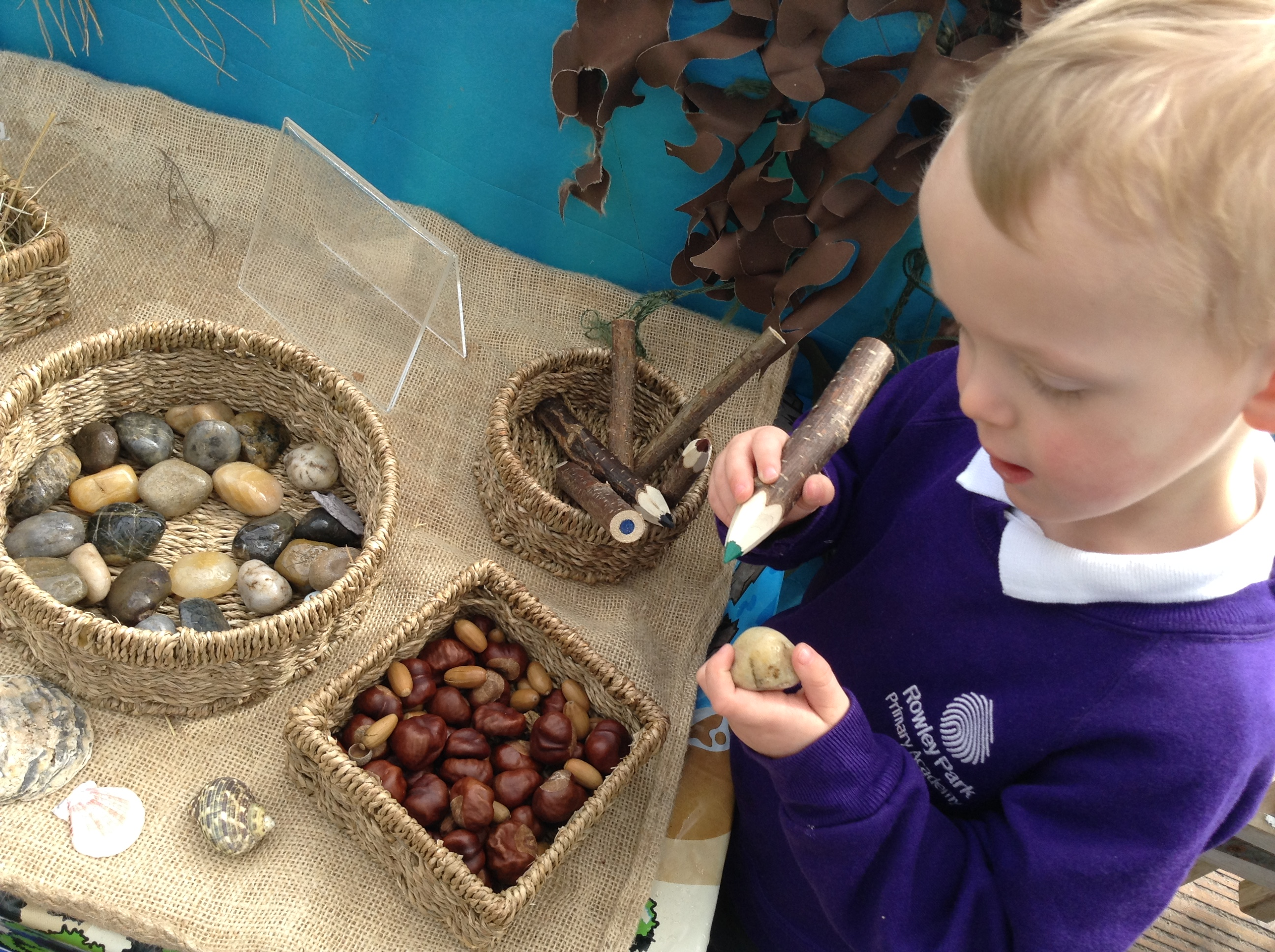 child looking at objects from nature