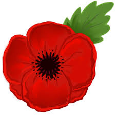 image of a red poppy